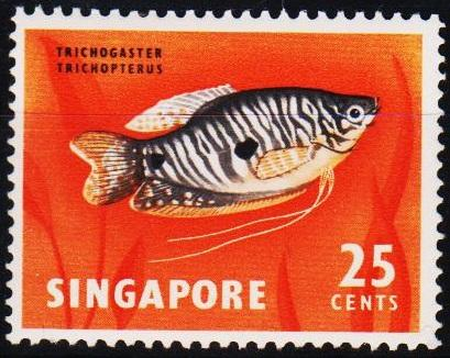 Singapore. 1962 25c S.G.72 Unmounted Mint