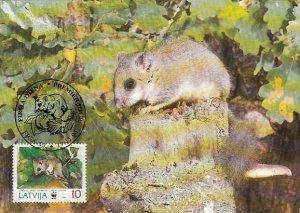 Latvia 1994 Maxicard Sc #382 10s Edible dormouse WWF