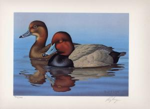 FLORIDA #10 1988 STATE DUCK STAMP PRINT REDHEADS by  Ronald Louque