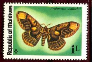 Maldive; 1974: Sc. # 584: **/MNH Single Stamp