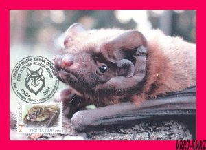 TRANSNISTRIA 2021 Nature Fauna Animals Flying Mammals Bat MaxiCard Maximum Card