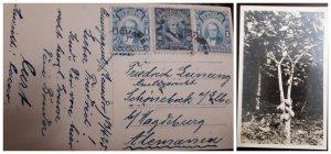 O) 1915 CIRCA - ECUADOR, MORENO 10c, ROCA 1c, PLANT OF CACAO - THEOBROMA CACAO,
