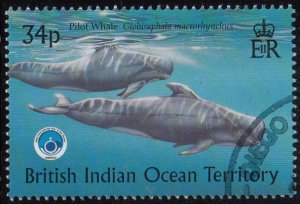 BIOT 1998 used Sc #205 34p Pilot whale Int'l Year of the Ocean
