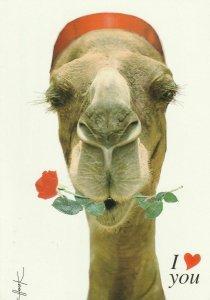 11082 Ansichtskarte Postcard CAMEL HUMOR TUNISIA