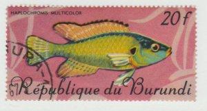 198  Fish