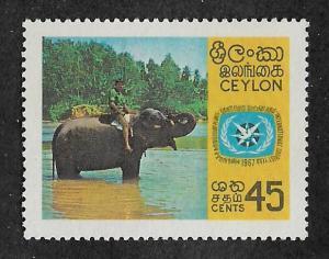 409,Mint Ceylon