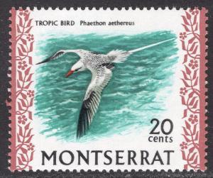 MONTSERRAT SCOTT 238