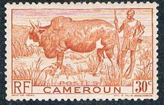 Cameroun 305 MLH Zebu and herder (BP5422)