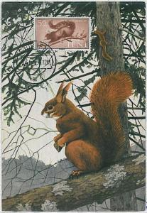 MAXIMUM CARD - POSTAL HISTORY - Ifni: Squirrels, Fauna, 1956