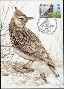 Belarus. 2017. Crested lark (Galerida cristata) (Mint) Maximum Card