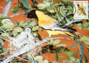 Ciskei - 1984 Birds 11c Oriole Maxi Card SG 14a