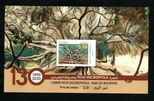 2020- Tunisia - Tree The Ficus Macrophylla at Belvedere Park- 130 years - Block