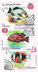 Yemen Used Fish (Y0003)