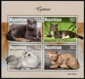 MOZAMBIQUE 2019 CATS SHEET MINT NEVER HINGED