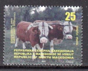 MACEDONIA 2021 ANIMALS WATER BUFFALO CATTLE FARM ANIMALS [#2101]