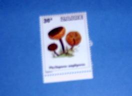Zaire - 910, MNH...Mushroom. SCV - $0.25