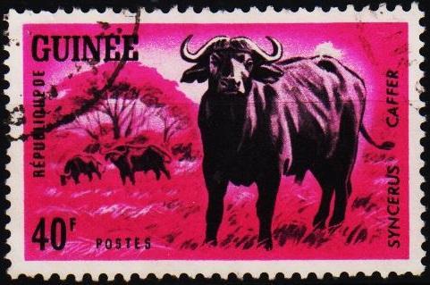 Guinea. 1964 40f. S.G.449 Fine Used