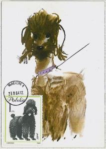 32364  MAXIMUM CARD - Animals DOGS : POLAND 1964 --- Poodle