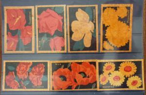 Match Box Labels! flora flower flowers nature russia russland sssr GJ11