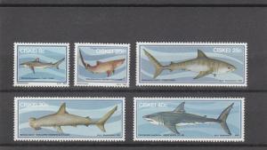 Ciskei MNH 54-8 Sharks 1983