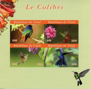 Chad Birds on Stamps 2020 MNH Hummingbirds Hummingbird Colibris 4v IMPF M/S