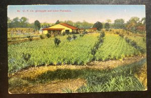 1940 Costa Rica Picture Postcard Cover To Maplecrest NY USA Pineapple Plantation