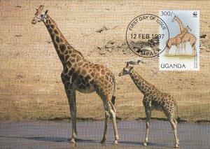 Uganda 1997 Maxicard Sc #1469d 300sh Rotschild's giraffe WWF