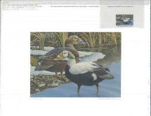ALASKA #3 1987  STATE DUCK STAMP PRINT REGULAR ED  SPECTACLED EIDERS.Reg $150