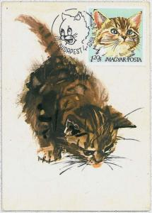 32495   MAXIMUM CARD - Animals CATS CAT : Hungary 1968 # 2
