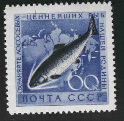 Russia Scott 2223 MNH** Salmon Fish stamp from 1959