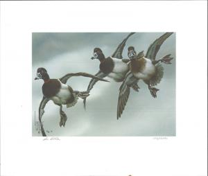 FLORIDA #4 1982 STATE DUCK STAMP PRINT  RING NECK DUCK  by Lee Cable
