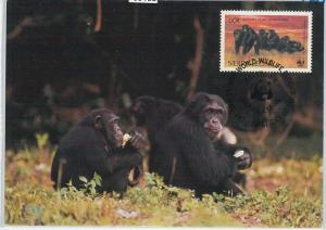 59108  -  SIERRA LEONE - POSTAL HISTORY: MAXIMUM CARD 1983 -  ANIMALS chimps WWF