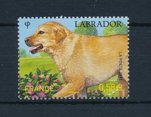 [28421] France 2011 Animals Dag Labrador MNH