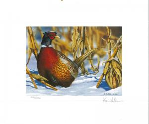 MINNESOTA #16U 1998 STATE PHEASANT  STAMP PRINT by Kevin Nelson