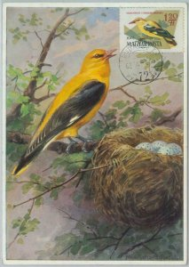 81321 - HUNGARY - Postal History - MAXIMUM CARD - 1962  Birds