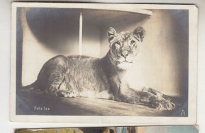 VICTORIA, St. KILDA Rly. Stn. cds., 1911 ppc. Lioness, 1d. to GB.