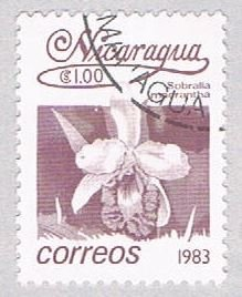 Nicaragua Orchid 1 (AP117012)