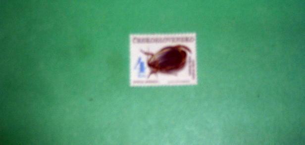 Czechoslovakia - 2866, MNH. Beetle. SCV - $2.25