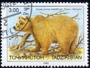 Brown Bear, Ursus Arctos, Tajikistan stamp SC#15 used