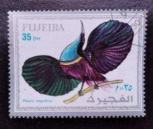 Animals, Fujairah (4)