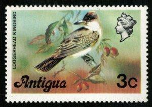 Bird, Loggerhead kingbird, Antigua, Great Britain, (3341-T)