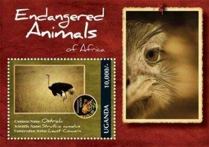 Uganda MNH S/S Endangered Ostrich 2012