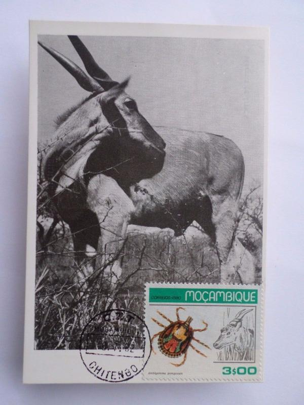 MAXIMUM CARD MOZAMBIQUE WILD LIFE NATURE FAUNA MOÇAMBIQUE INSECTS AFRICA  Z1