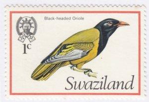 Swaziland, Sc 244, MNH, 1976, Black Headed Oriole