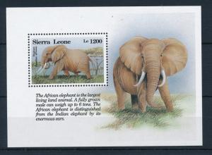 [28681] Sierra Leone 1993 Wild Life Mammals Elephant MNH Sheet