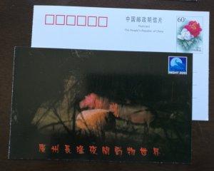 Hippopotamus,hippo,CN 01 guangzhou changlong night zoo advert pre-stamped card