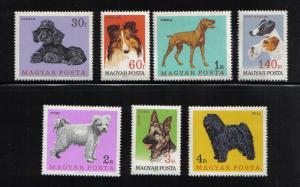 Hungary  #1835-1841 MNH  1967   dogs   pointer   terrier  pumi  German shepher