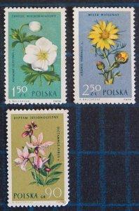 Flowers, (2592-T)