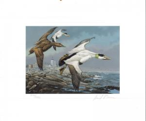 MAINE #2 1985  STATE DUCK STAMP PRINT COMMON EIDERS, LIGHTHOUSE by David Maass