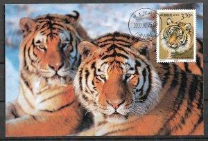 CHINA STAMPS,  2000, MAXI CARD MC MAXIMUM CARD TIGER